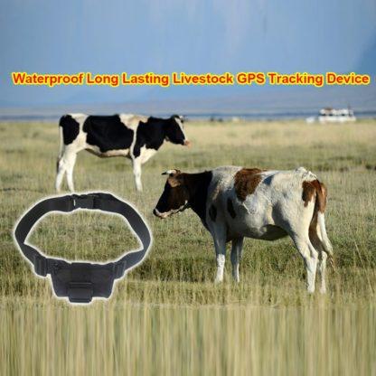 GPS трекер для отслеживания домашнего скота с длительным временем работы